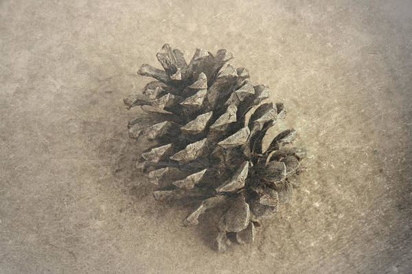 Photograph - Pinecone by Mark  Ross