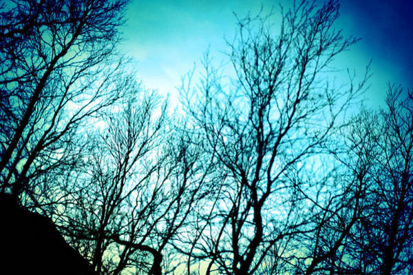Photograph - Pinhole Camera Shoot Of Trees In Winter by U Schade