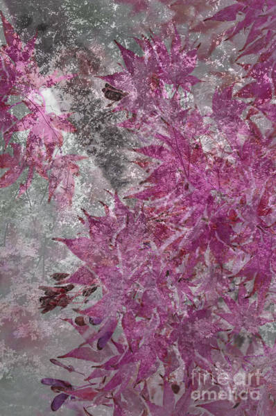 Wall Art - Photograph - Pink And Grey by Affini Woodley