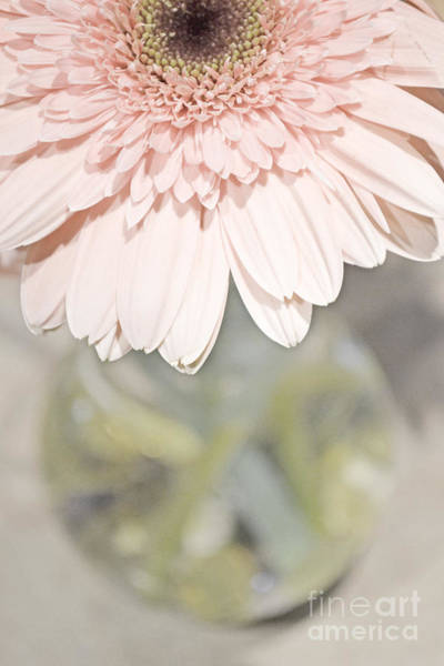 Photograph - Pink And Perfect by Traci Cottingham