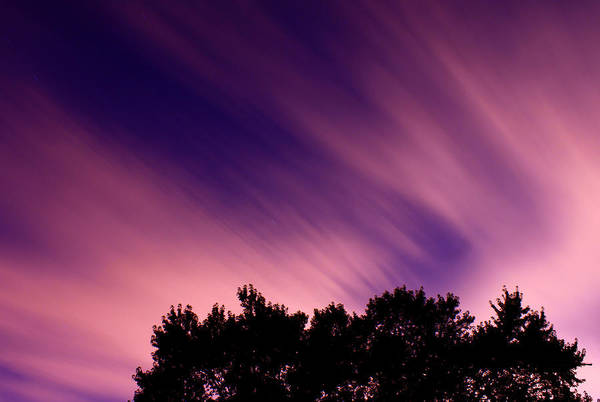 Treeline Photograph - Pink Clouds by Cale Best