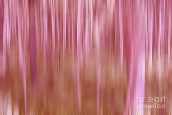 Photograph - Pink Forest by Sharon Mau