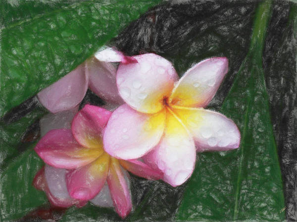 Painting - Pink Frangipani by Dean Wittle