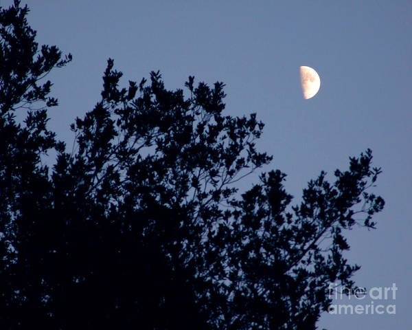 Photograph - Pink Half Moon Photograph by Kristen Fox