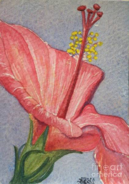 Wall Art - Painting - Pink Hibiscus by Lisa Bell