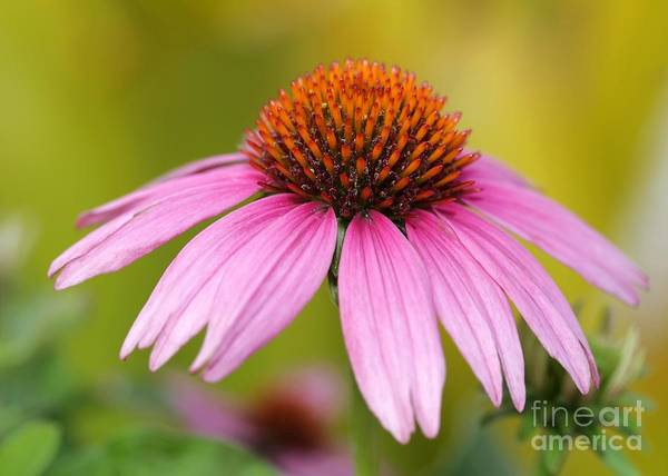 Photograph - Pink Is In by Sabrina L Ryan