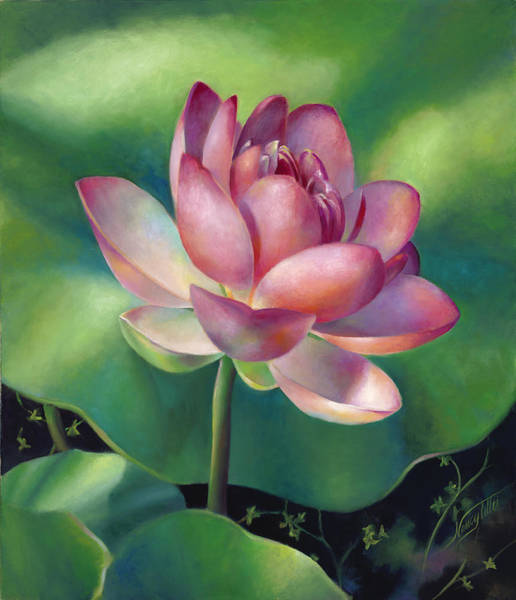 Wall Art - Painting - Pink Lotus Water Lily by Nancy Tilles