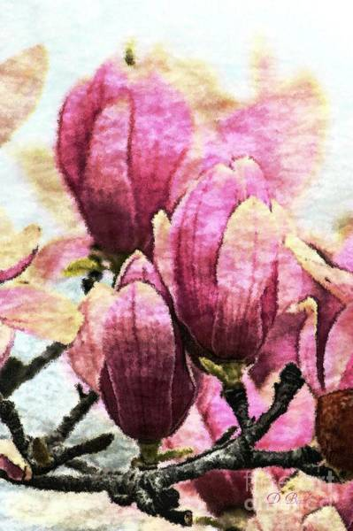Photograph - Pink Magnolia Blossoms by Donna Bentley