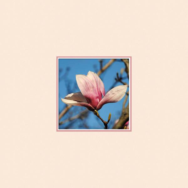 Photograph - Pink Magnolia Photo Square by Jai Johnson