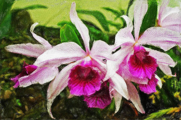 Painting - Pink Orchids 301 by Dean Wittle