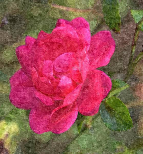 Wall Art - Photograph - Pink Rose by Dawn OConnor