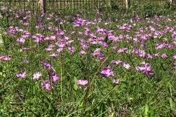 Photograph - Pink Spring Flowers by Sarah Broadmeadow-Thomas