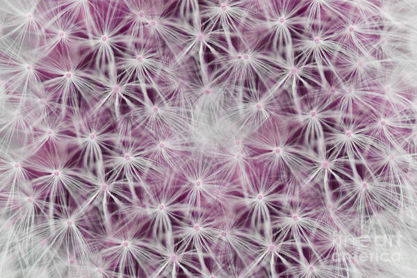 Photograph - Pink Wishes by Traci Cottingham
