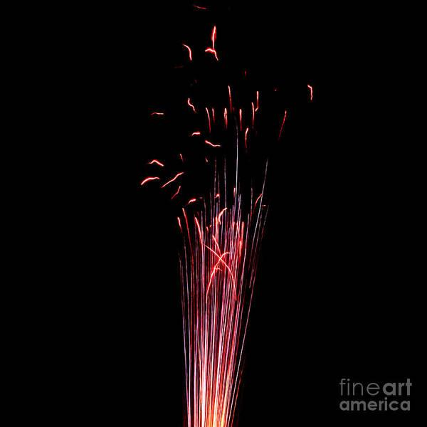 Photograph - Pistillate Flower by Agusti Pardo Rossello
