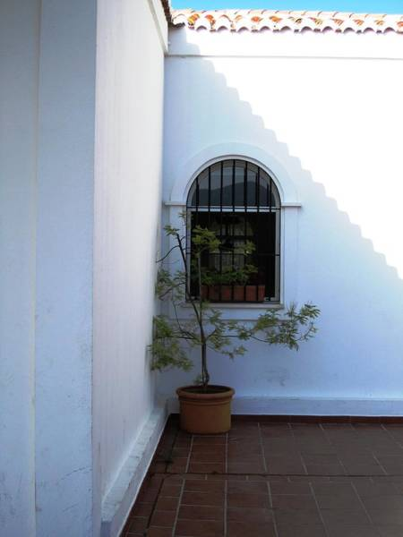 Photograph - Plant In A Lonely Corner Mijas Spain by John Shiron