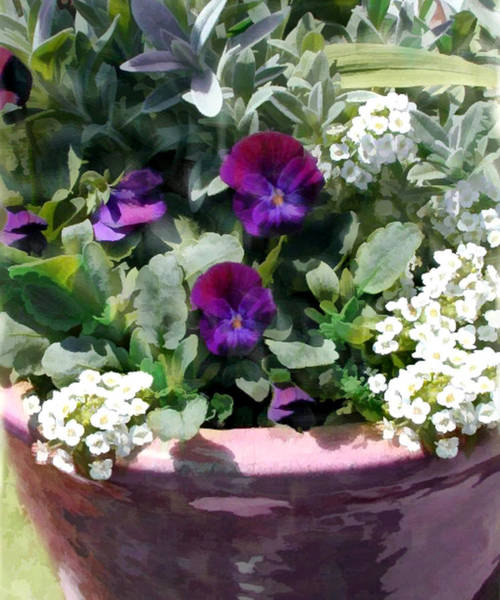 Annual Painting - Planter Of Purple Pansies And White Alyssum by Elaine Plesser