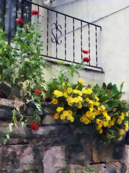 Photograph - Planter With Yellow Flowering Cactus by Susan Savad