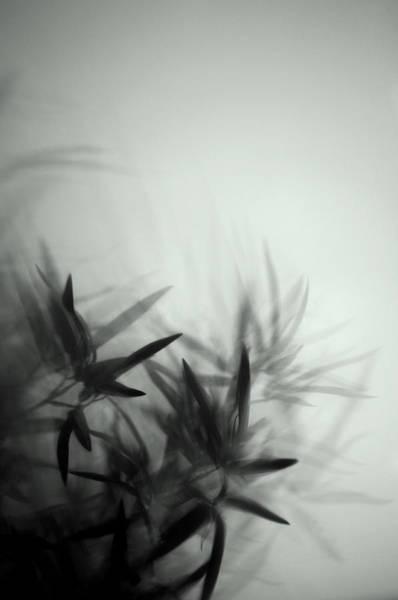 Photograph - Plants by Fabrizio Troiani