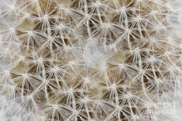 Photograph - Plenty Of Wishes by Traci Cottingham