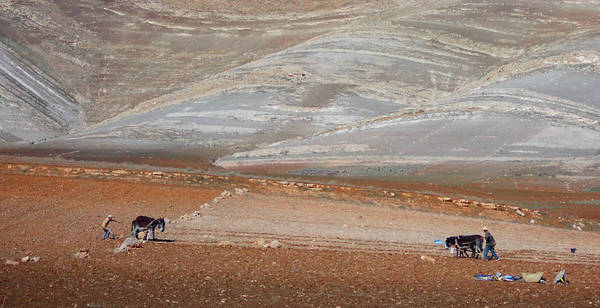Photograph - Ploughing In The Atlas Mountains by Miki De Goodaboom