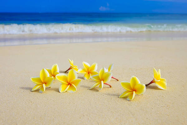 Del Photograph - Plumerias On Beach II by Tomas del Amo