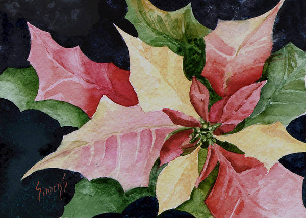 Painting - Poinsettia by Sam Sidders