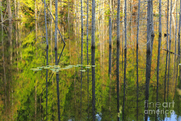 Photograph - Pond Dreams by Beve Brown-Clark Photography
