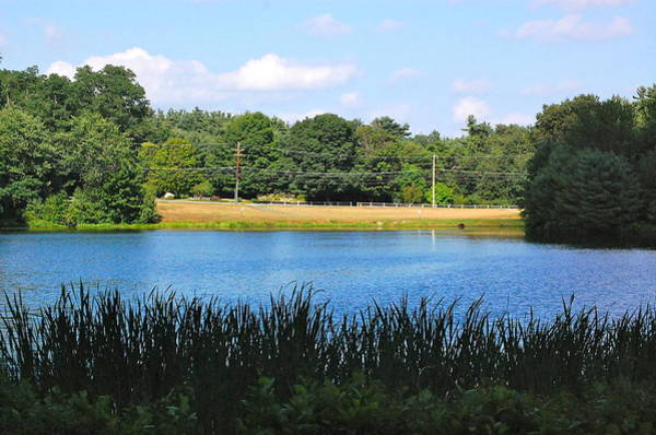 Photograph - Pond I by Mary McAvoy
