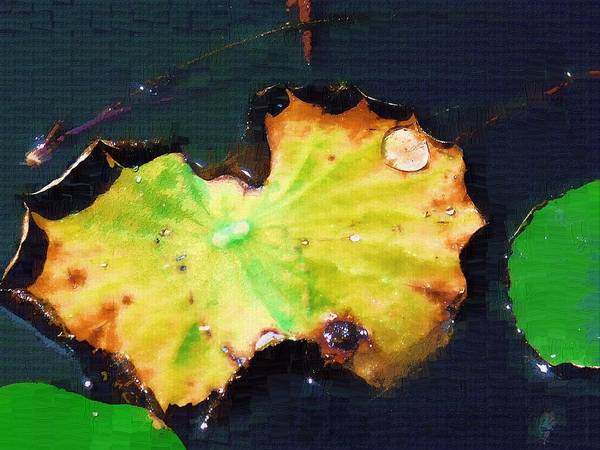 Wall Art - Digital Art - Pond Lily 2 by Eve Paludan