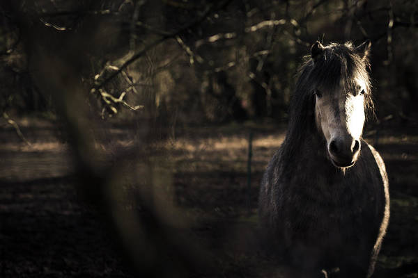 Thicket Photograph - Pony In The Brambles by Justin Albrecht