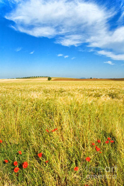 Photograph - Poppies And Cloud by Silvia Ganora