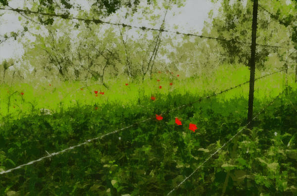 Photograph - Poppies In The Shade by Michael Goyberg