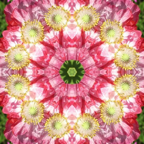 Poppy Explosion Art Print