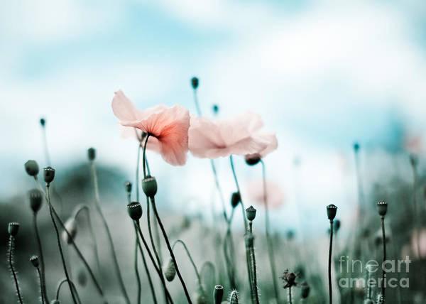 Poppy Field Photograph - Poppy Flowers 02 by Nailia Schwarz