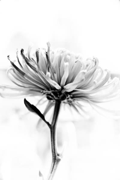 Hakon Photograph - Portrait Of A Flower by Hakon Soreide