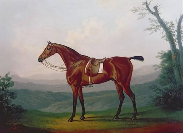 Race Horse Wall Art - Painting - Portrait Of A Race Horse by Daniel Clowes