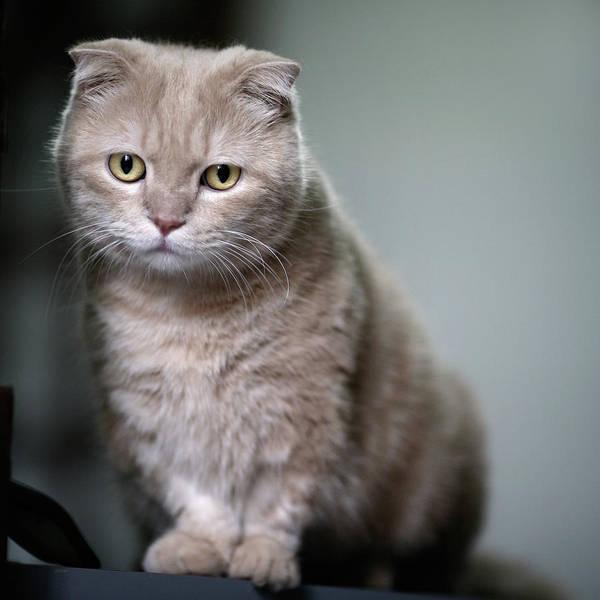 Staring Photograph - Portrait Of Cat by LeoCH Studio