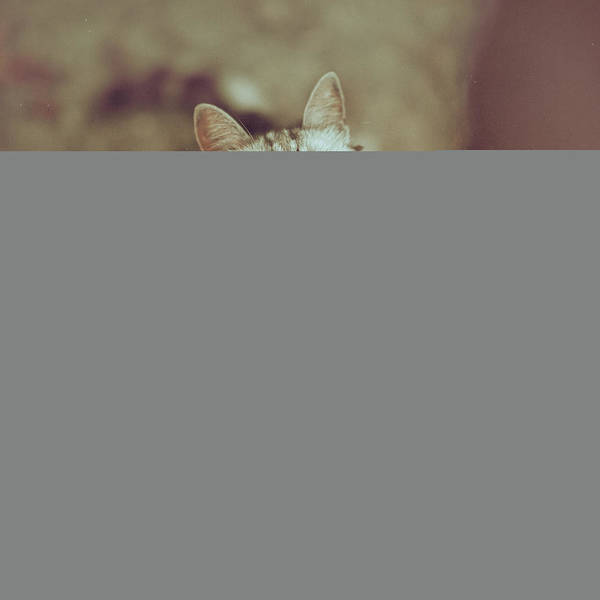 Photograph - Portrait Of Cat Looking Up by Alberto Cassani