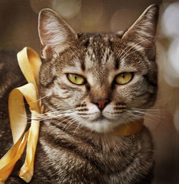 Portrait Of Tabby Cat With Yellow Ribbon Art Print by by Sigi Kolbe