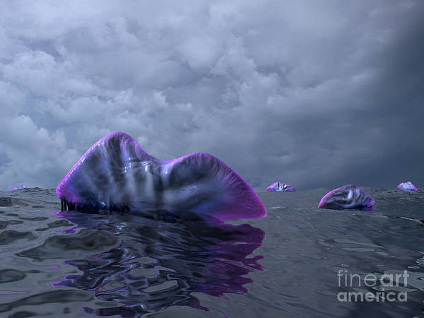 Paleobotany Digital Art - Portuguese Man O War Swarm by Walter Myers