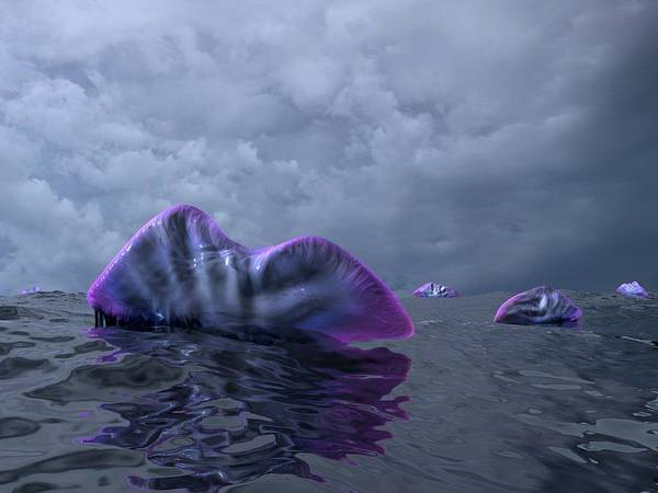 Siphonophore Photograph - Portuguese Men-of-war, Artwork by Walter Myers