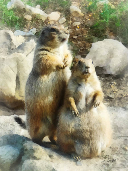 Photograph - Prairie Dog Formal Portrait by Susan Savad