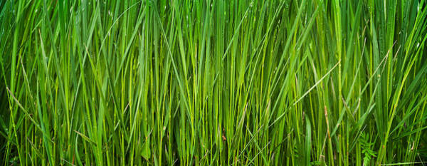 Wall Art - Photograph - Prairie Grass Panorama by Steve Gadomski