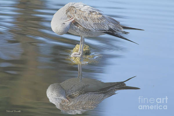 Photograph - Preening My Feathers by Deborah Benoit