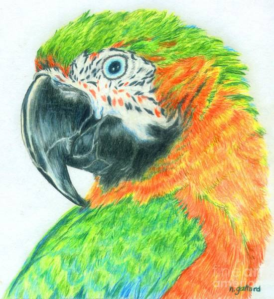 Painting - Pretty Bird by Norma Gafford