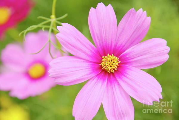 Photograph - Pretty In Pink by Ken Williams