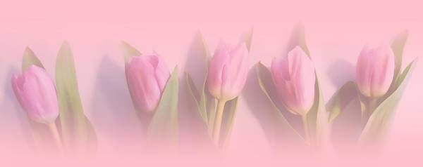 Rose Bud Digital Art - Pretty In Pink by Sharon Lisa Clarke