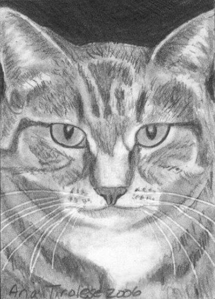 Drawing - Pretty Kitty - Aceo by Ana Tirolese