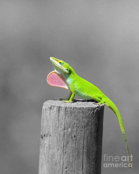 Green Anole Photograph - Pretty Penny - Selective Color by Al Powell Photography USA