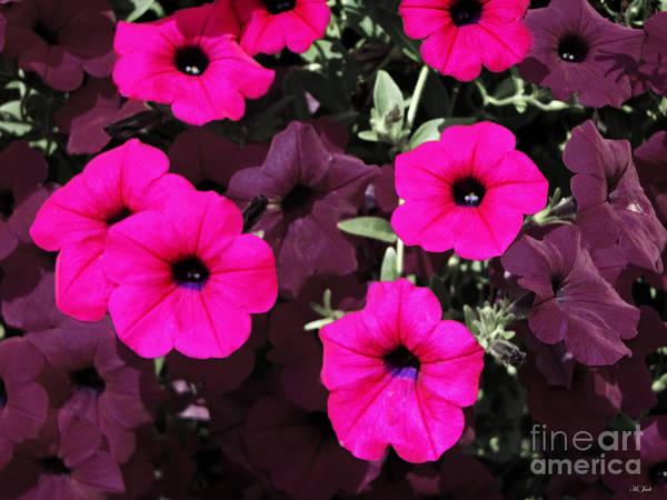 Photograph - Pretty Pink by Ms Judi